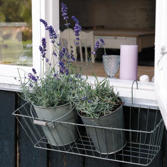 hae-altankasse-plante-blomster-lavendel-zink