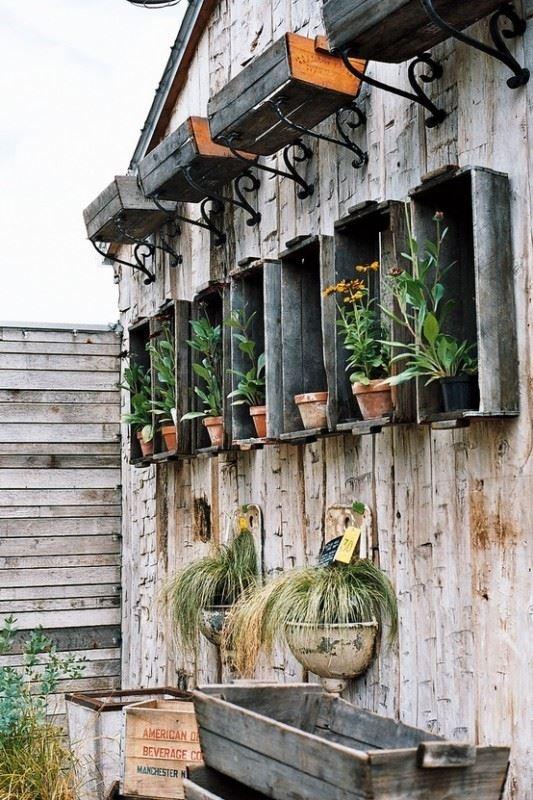 Hvor skal vi plante sommerblomsterne?