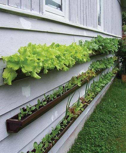have-planter-altankasser-diy-garden-jpg