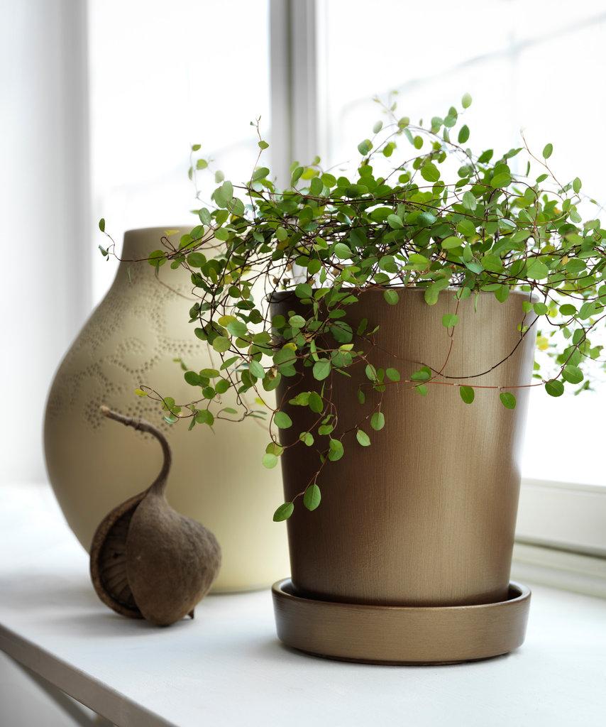 Flowerpot_002838.jpg