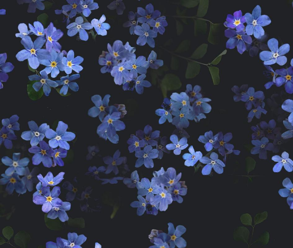 wallpaper-tapet-flower-blue-blaa